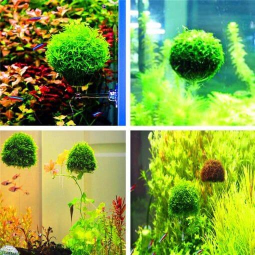 Yüzen Moss Saksısı Yarım Küre Şeklinde