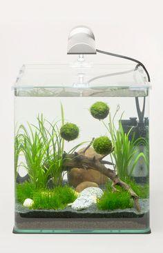 Yüzen moss küresi ile yapılmış bitkili akvaryum tasarımı