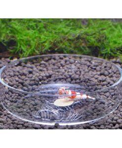 Akrilik Petri Kabı - Karides Yemleme Aparatı