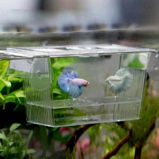 Balık Yavruluğu