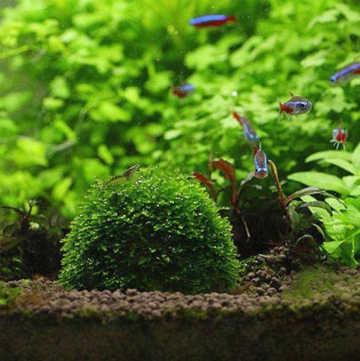 Moss Küresi